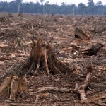 How does Deforestation Affect Animal Life