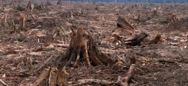 How Does Deforestation Affect Animal Life?