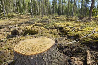 Effects of deforestation on the environment
